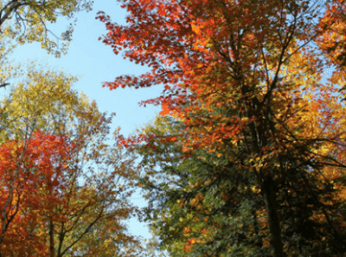 Wolfe's Neck Woods State Park - Fall in the Forest