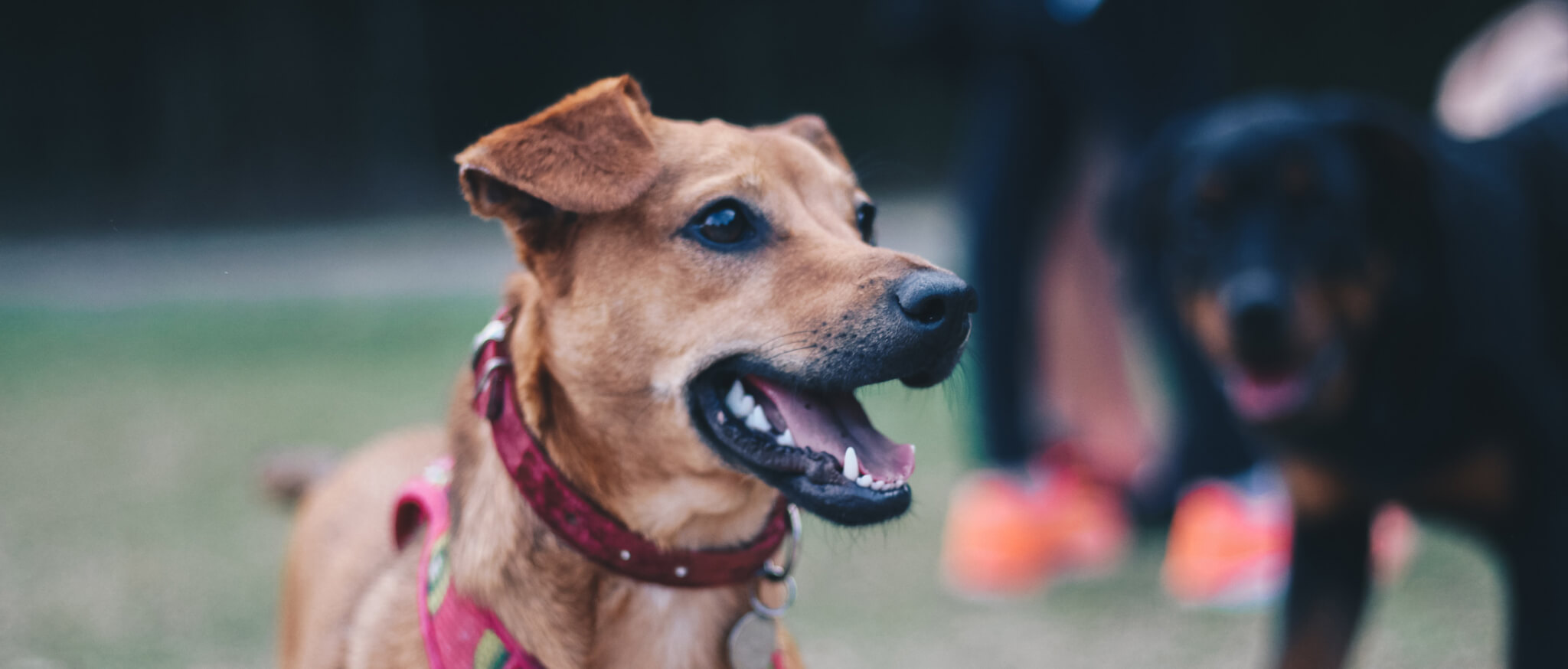 Whole Dog Camp at Bliss Woods Farm - Freestyle Freeport: Open House and Canine Good Citizen Testing